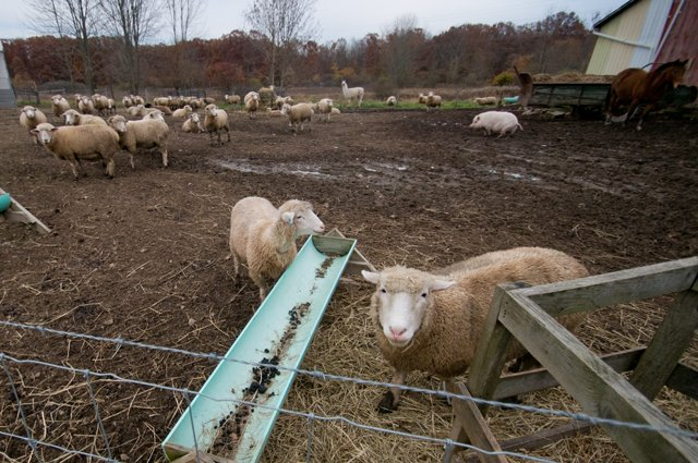 The Spicy Lamb Farm