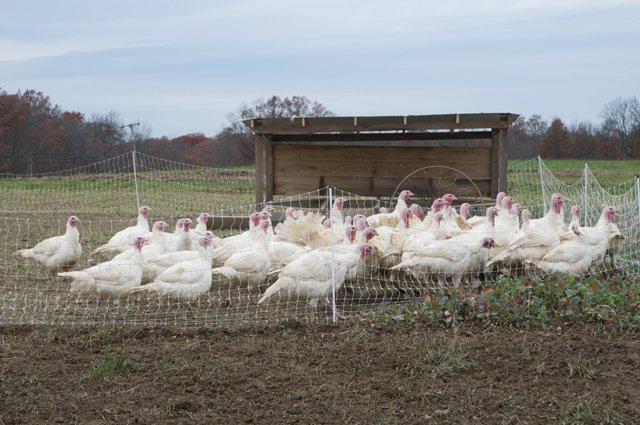 The Trapp Family Farm