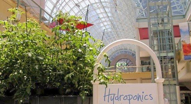 gardens_under_glass_01