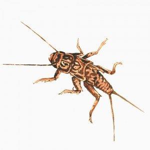 BugFinal