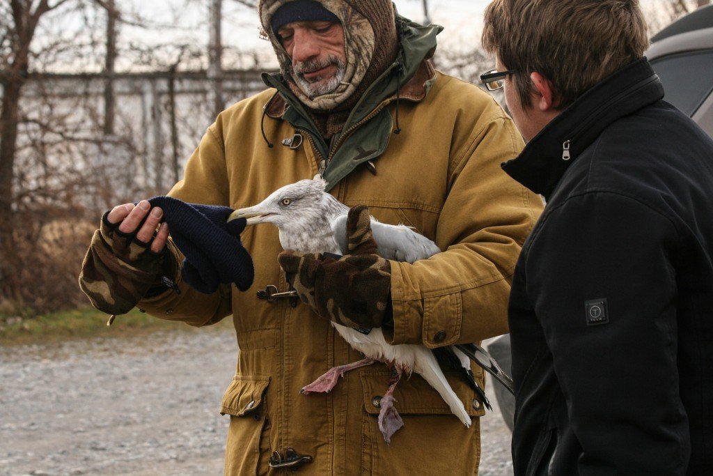 Chuck Slusarczyk Jr. calms a bleeding gull he found on the mouth of the Cuyahoga River, and waits for Tim Jasinski, Wildlife Rehabilitation Specialist at the Lake Erie Science and Nature Center to come pick up the injured bird.