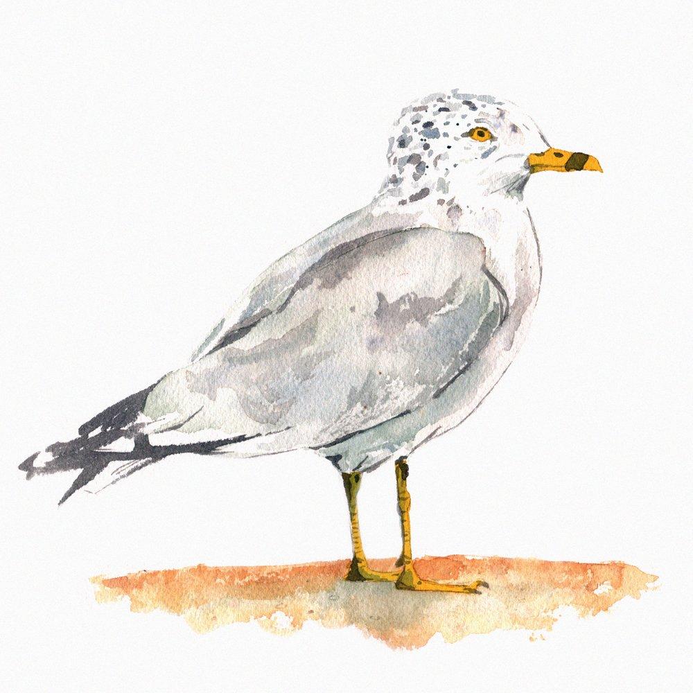 gullfinal