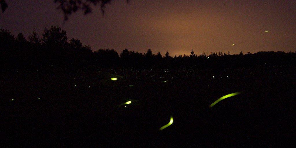 Fireflies at night [credit: Matt MacGillivray (http://flickr.com/people/qmnonic/)]