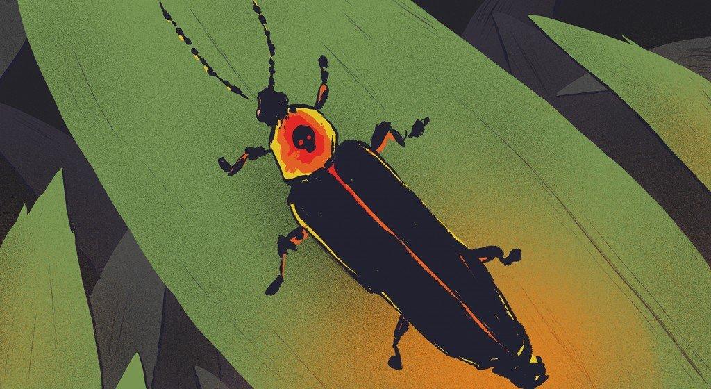 beltlightningbugweb