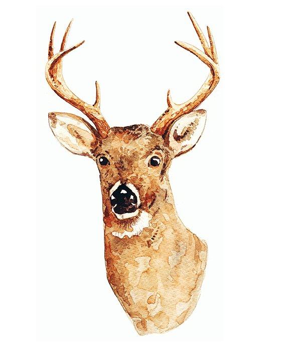 deerspot