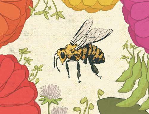 Can Agriculture Save Pollinators?