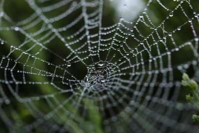 Spider web by Michael Podger