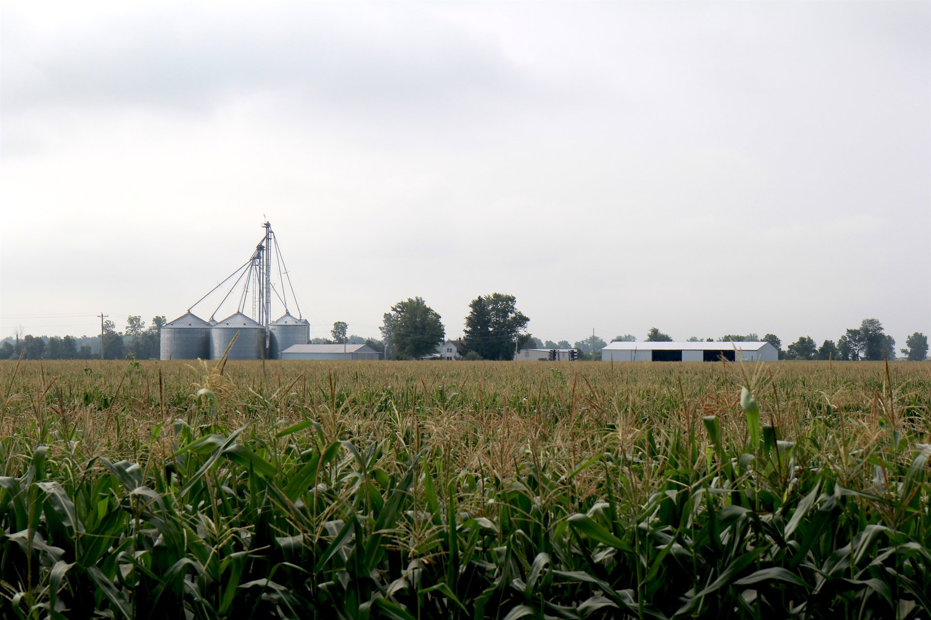 Losing the Farm