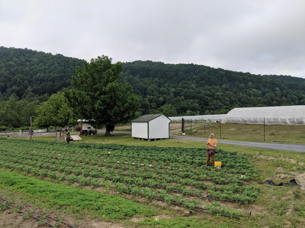 Appalachian Foodways 2