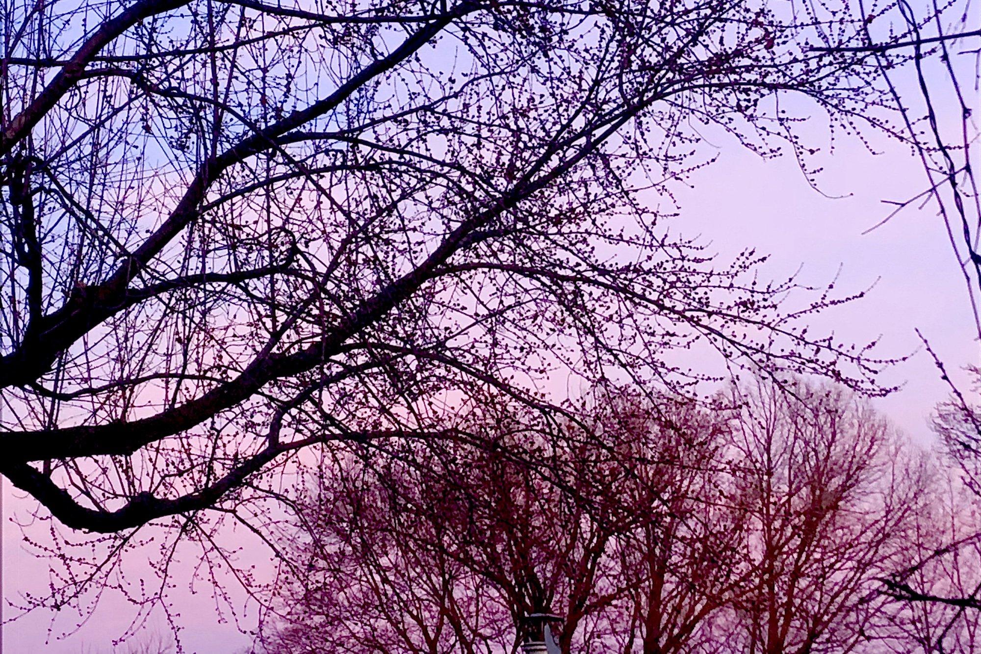 Castillo - Trees