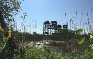 Gordon - Indian Ridge Marsh 1