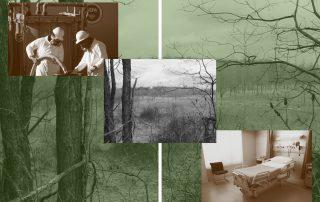 Njie - IEL Collage